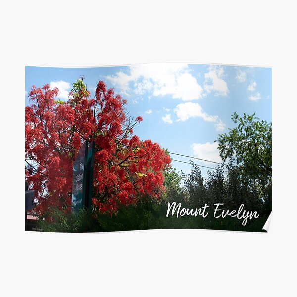 Mount Evelyn Illawarra Flame Tree Poster
