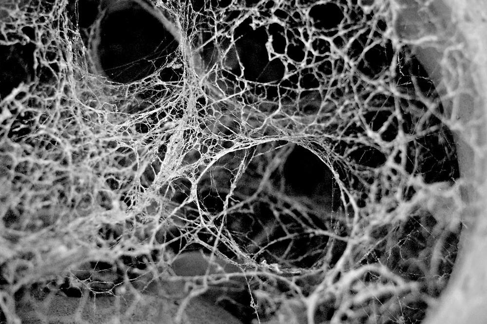 Cobwebs by Amy Rawlings