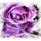 Rose Reflected by EdsMum