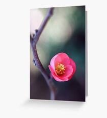 Just One Flower Greeting Card