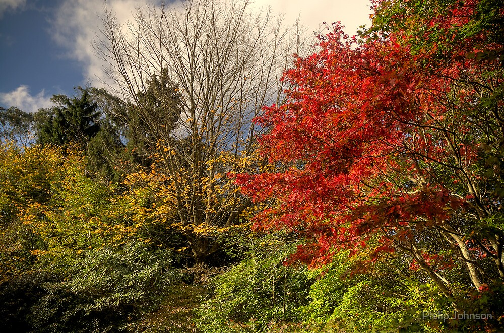 Autumn -Mount Wilson, Sydney -The HDR Experience  by Philip Johnson