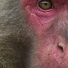 Eye see Monkeys by Robert Chester Lee
