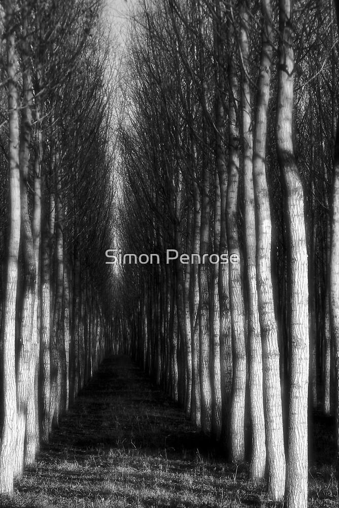 ghostly williows by Simon Penrose