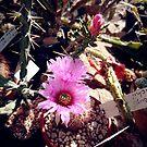 Kaktus von Gourmetkater