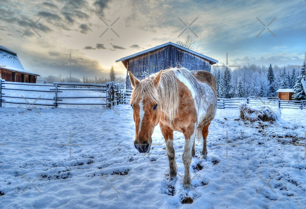 Palomino Paint and Barn in Winter by Skye Ryan-Evans