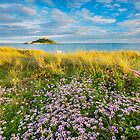 Wildflowers at St Michael's Mount, Marazion by Justin Foulkes
