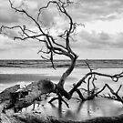 Fallen Tree by Scott Carr