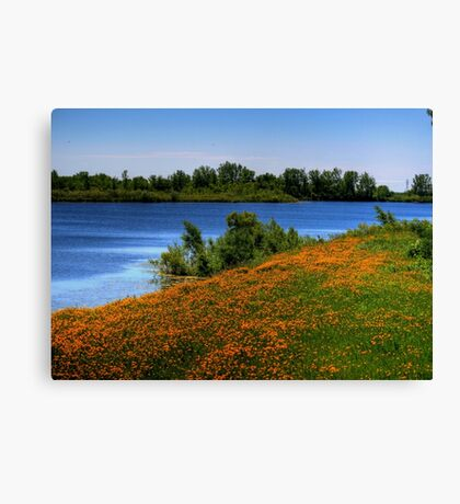 Field of Flowers - HDR Canvas Print