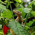 Lizard Lounge by Alison M
