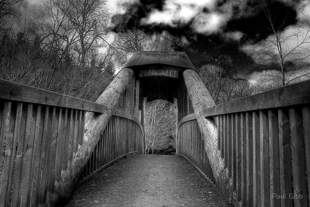 Forest Bridge by Paul  Gibb