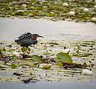 Hammond Pond, MA  by LudaNayvelt