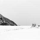 Two tree island in winter by Sebastian Reinholdtsen
