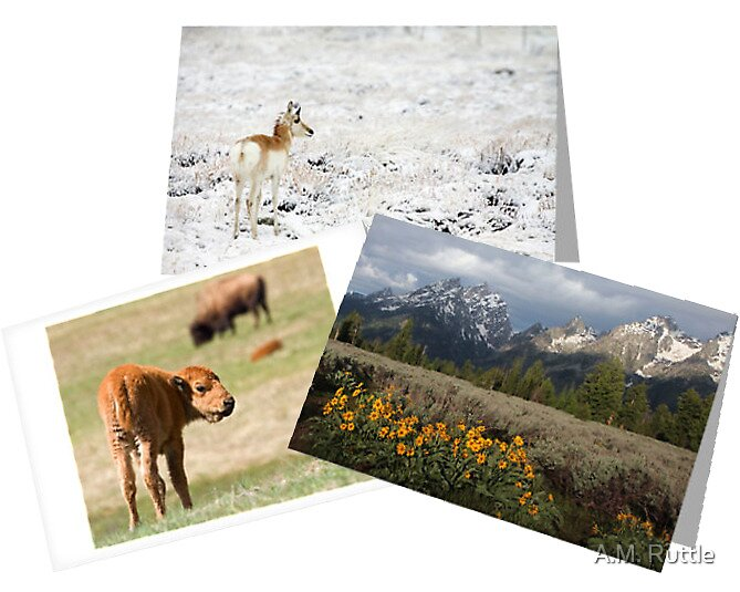 Ruttle Wildlife & Scenic Cards by A.M. Ruttle