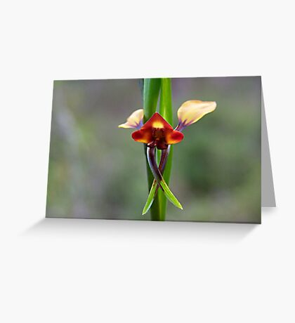 The Donkey Orchid (Diuris corymbosa) Greeting Card