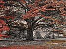 The Magical Tree of Brodsworth by Ryan Davison Crisp