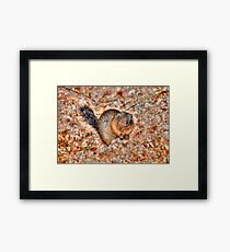 Marmot Munchies Framed Print