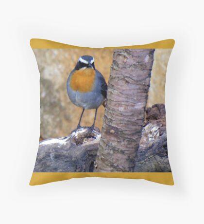 Janfredredik / Cape Robin Throw Pillow