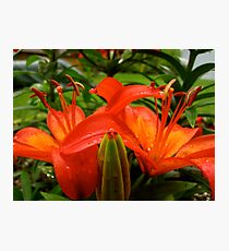 Lilies Photographic Print