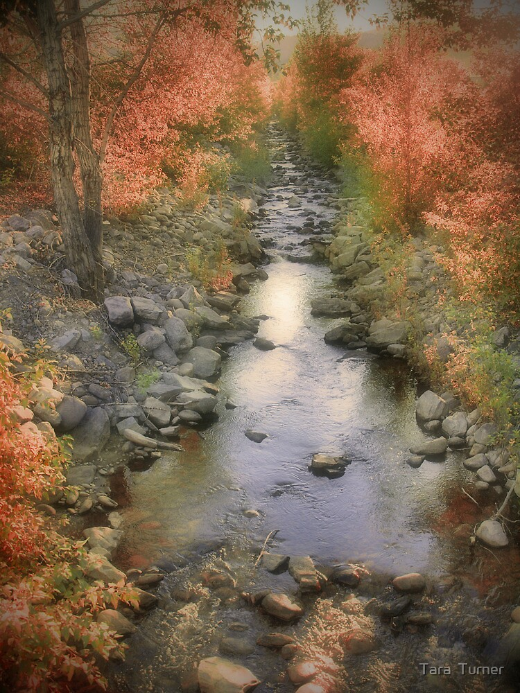 Morning by the Creek by Tara  Turner