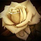 Asleep in the Roses by Kym Howard