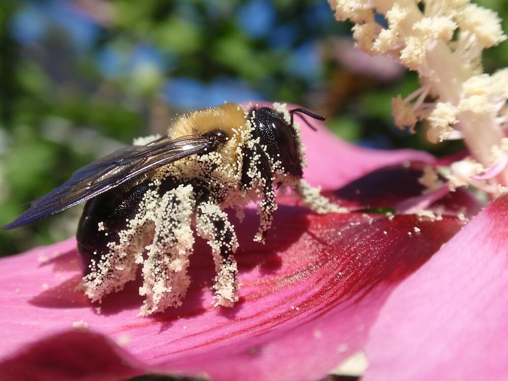 Pollen-Laden Bumblebee by Sonnet Schulz