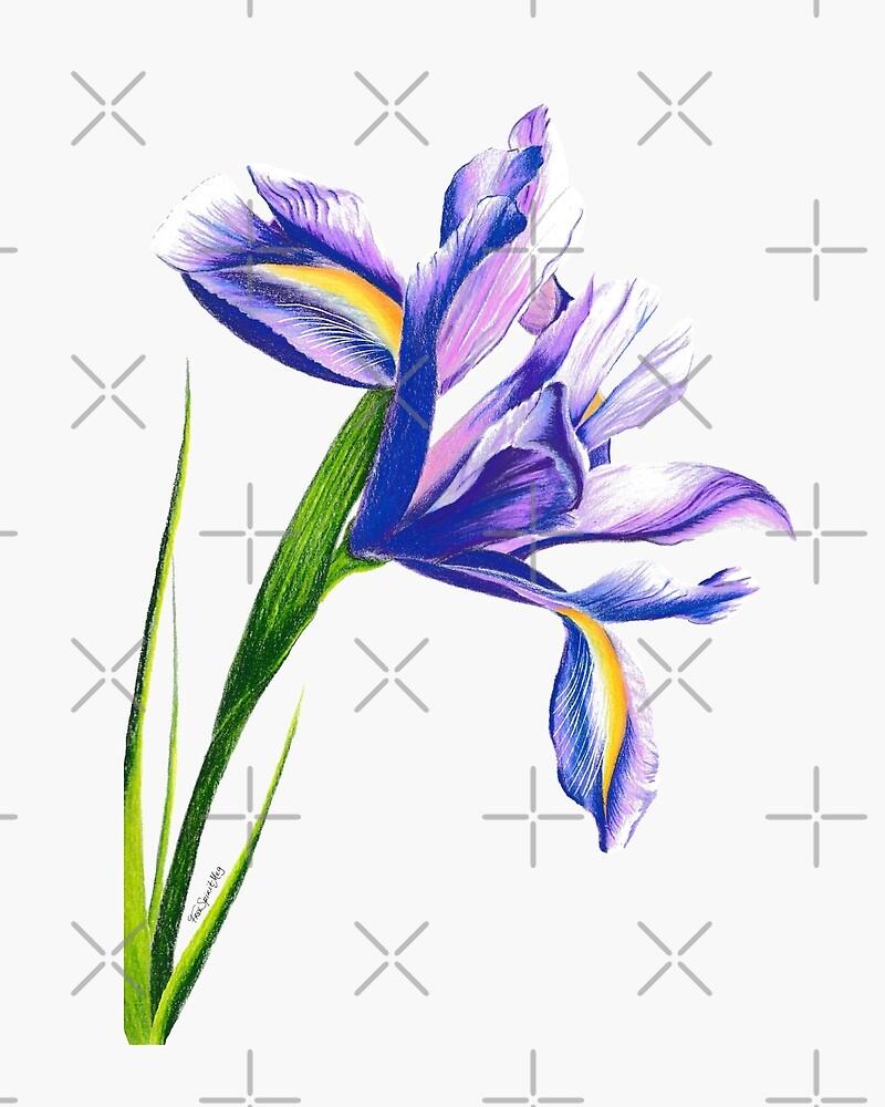 Iris by Free-Spirit-Meg