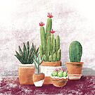 A Collection of Cacti by Laura Maxwell