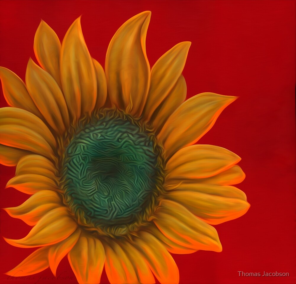 red sunflower by Thomas Jacobson