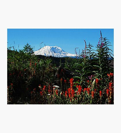 Wildflowers & Mt. Rainier Photographic Print