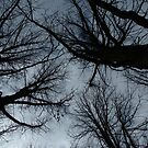 Middle of Winter-Worms Eye View by apotek