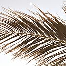 Palm Tree Leaves in Beige von PrintsProject
