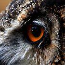 Eyes of Wisdom by jennimarshall