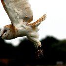 Barn owl in flight by jennimarshall