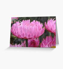 Pink perfection - Growing wild, Wongan Hills, Western Australia Greeting Card