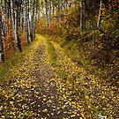 Aspen Trail by Alex Burke