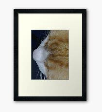 Cuddles - close up Framed Print