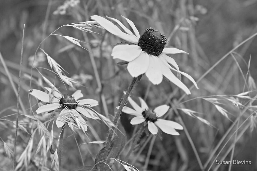 Black eyed Susans by Susan Blevins