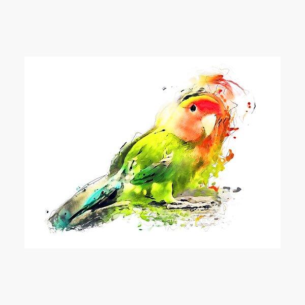 Lovebird Photographic Print