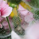 Pansies and spiderweb by neva2010