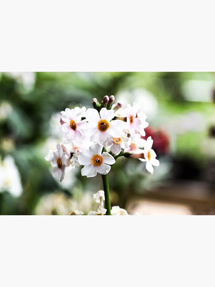 Milkweeds at Savill Garden staring at you by santoshputhran
