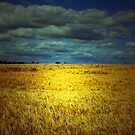 MY FIELD OF DREAMS by leonie7