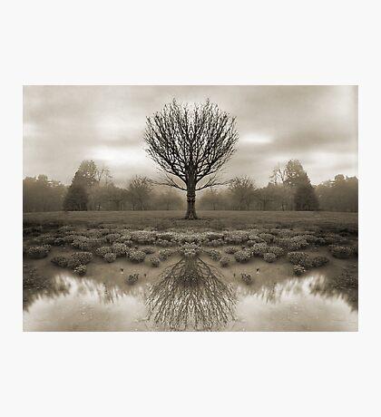 mirrored reality Photographic Print