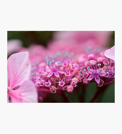 """""""The Pink of perfection"""" Photographic Print"""