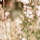 Pink toned flowers by Stacey Still