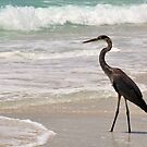 The Great Blue Heron and the Beach by Jeff Ore