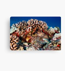 Guardian of the Reef Canvas Print