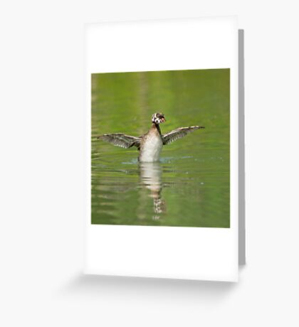 Grebe see, grebe do  Greeting Card