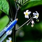 Tiny Flower by Raoul Isidro
