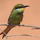 Swallow-tailed Bee-eater by naturalnomad