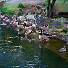 Geese! Geese! by DeerPhotoArts